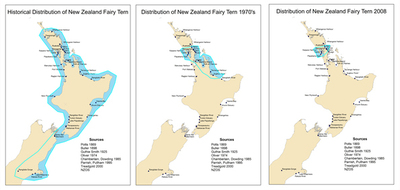 Fairy Tern Distribution